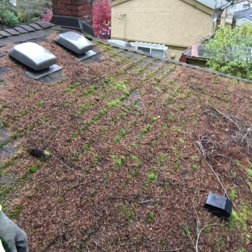 Roof Cleaning Everett