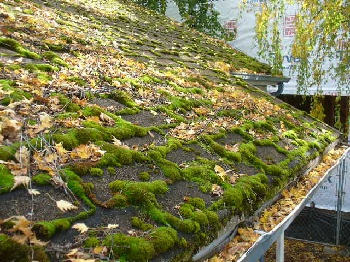 Moss Removal & Moss Treatments