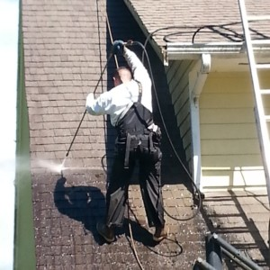 Bellingham Roof Cleaning