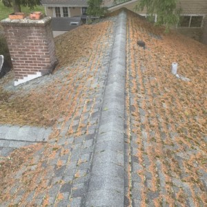 Everett Roof Cleaning