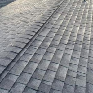 Arlington Moss Removal & Roof Cleaning